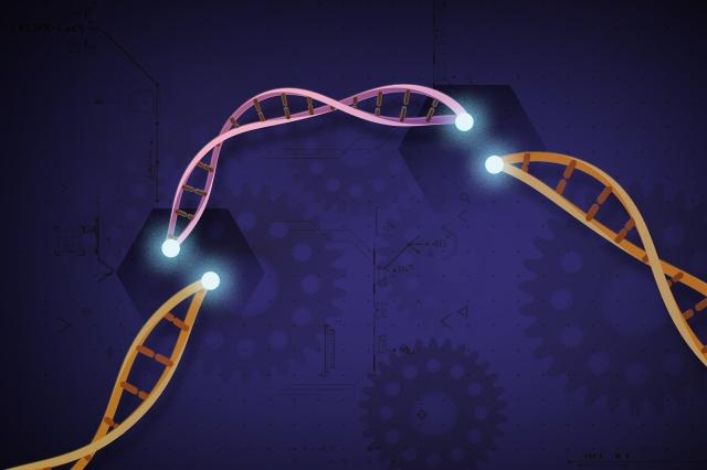 CRISPR Cas9_NIH image gallery